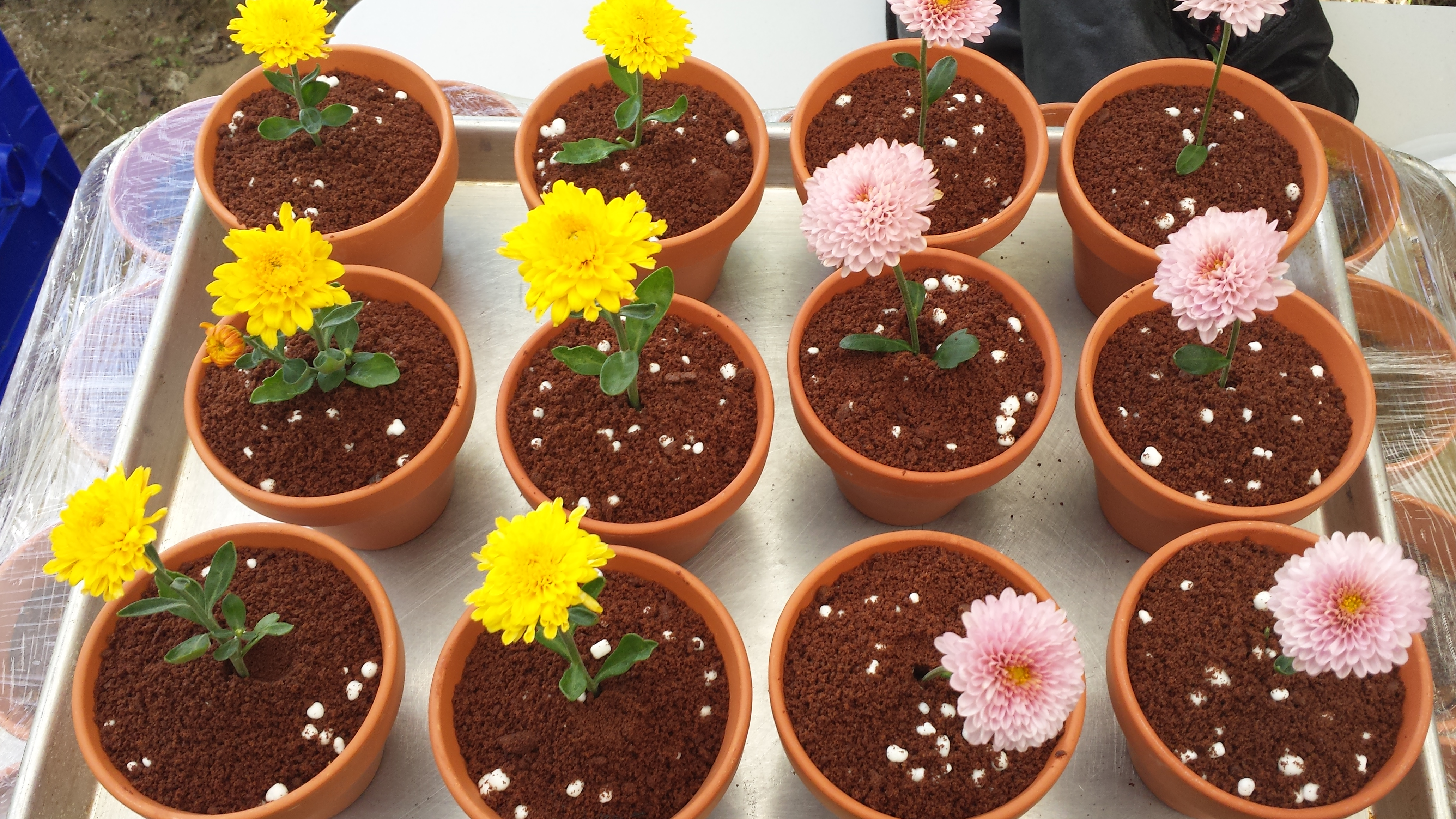 Landry\u0027s Confections & Celebrate Spring With Flower Pot Cakes \u2013 Here\u0027s How to Make Them ...